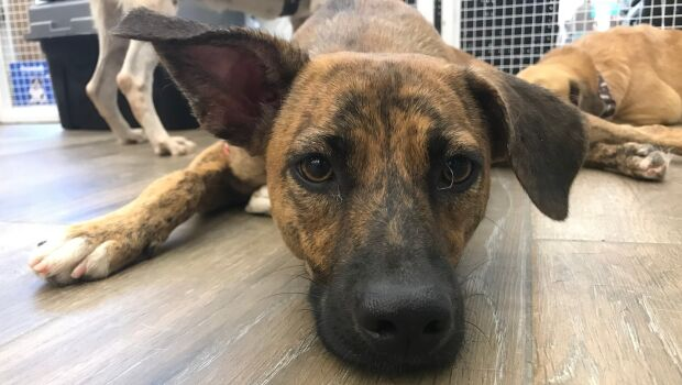 Em parceria com protetores, Mundo Pet faz eventos de adoção neste sábado (24)