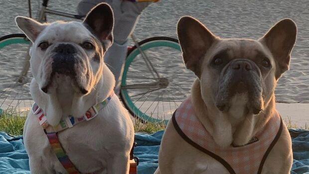 Cachorros de Lady Gaga são devolvidos após roubo nos EUA