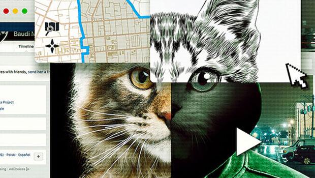 """""""Não sacaneie os gatinhos"""" é recado de documentário na Netflix"""