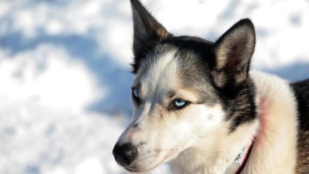 Primeiros seres humanos chegaram à América do Norte acompanhados de cães, afirmam cientistas