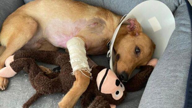 Whindersson Nunes e Maria Lina adotam cão resgatado que sobreviveu por milagre