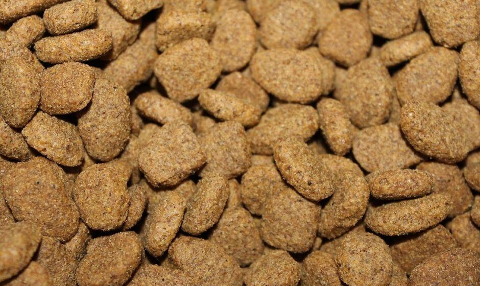 Cinco motivos para não comprar ração a granel para o pet
