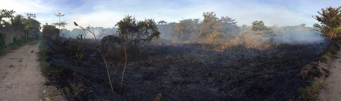 Fogo atingiu área de 3 hectares de mata