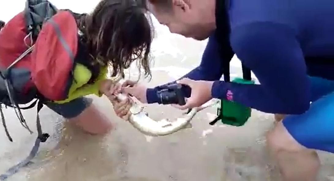 Tubarão mordeu turista após captura