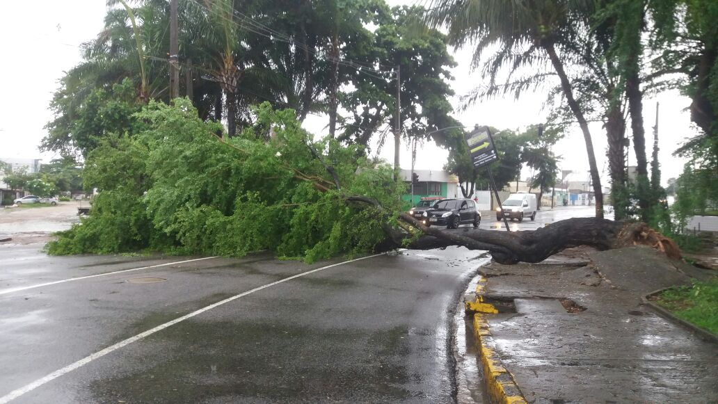 Árvore caiu e interditou trecho de avenida