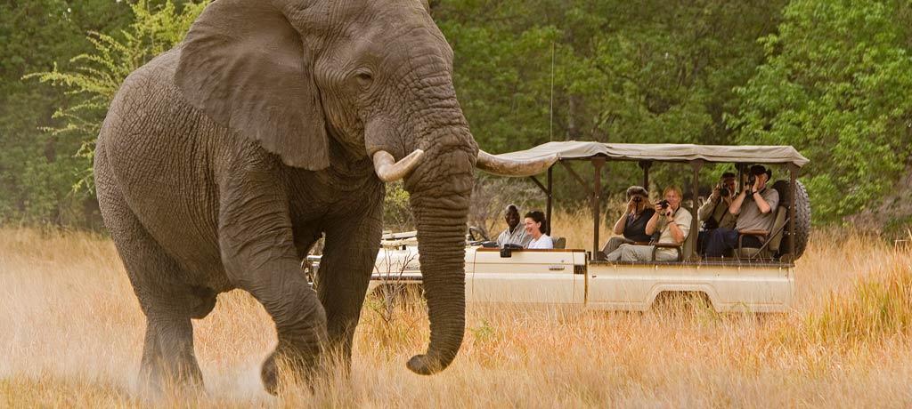 O roteiro inclui passeios guiados pela selva africana