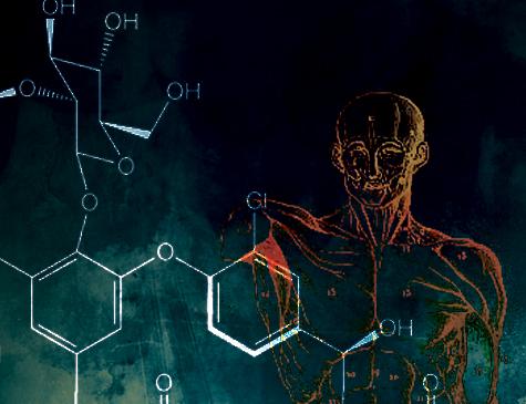 A vida biológica, como a compreendem os estudiosos da área da saúde, segue a maestria de princípios
