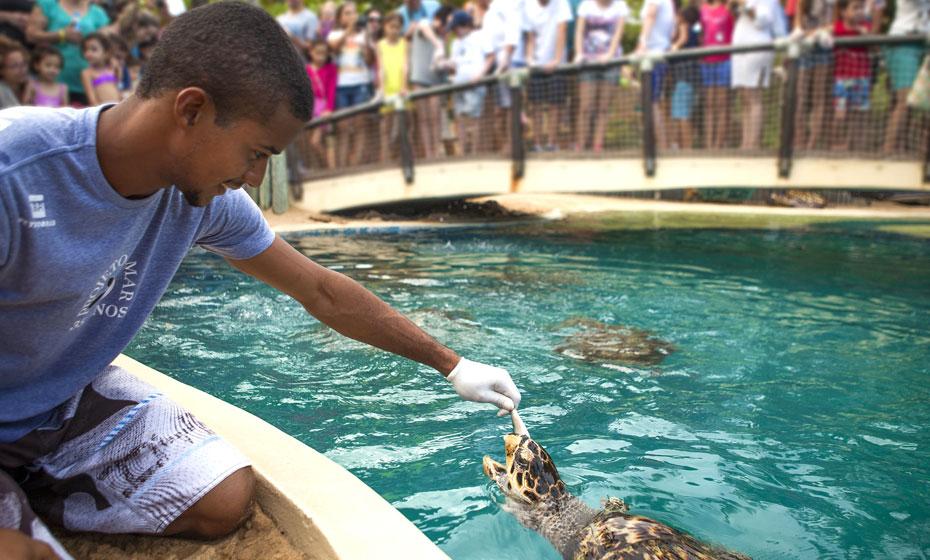 Tartarugas são alimentadas em tanque do Tamar na Praia do Forte