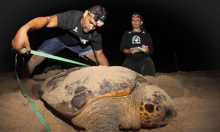 Equipes terão mais acesso aos locais de desova das espécies de tartaruga