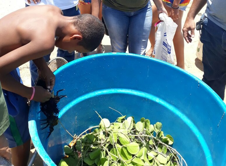 Resgate de caranguejos-uçá em Sirinhaém