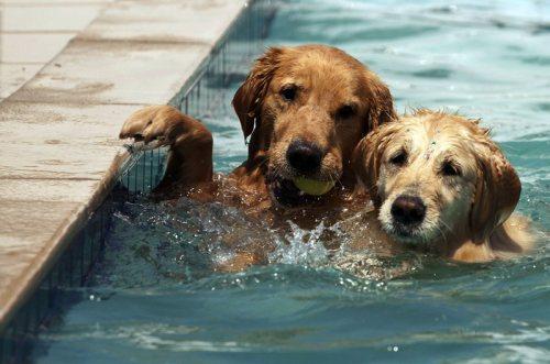 Imagem ilustrativa | O hotelzinho tem até piscinas para os cachorros