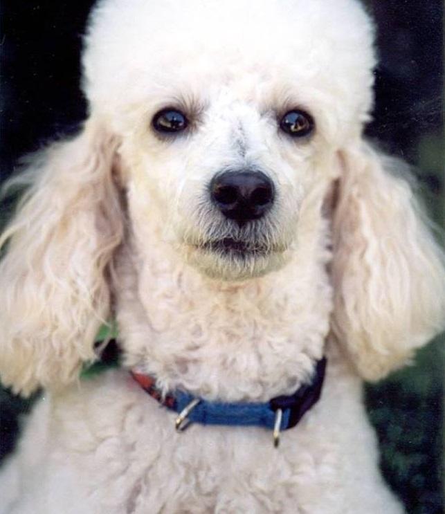 Flora, de 12 anos, é cega e desapareceu na última quarta-feira (9)