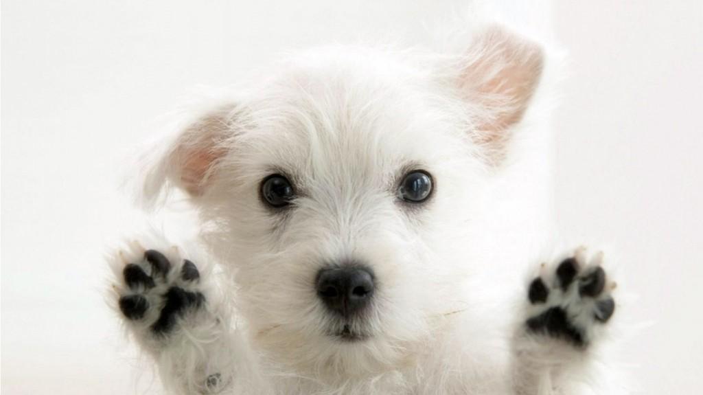 Cães estamparão selos dos Correios
