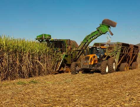 Cana de Açúcar, produção do plantio