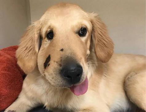 Paula Godwin compartilhou a imagem do cão em sua rede social