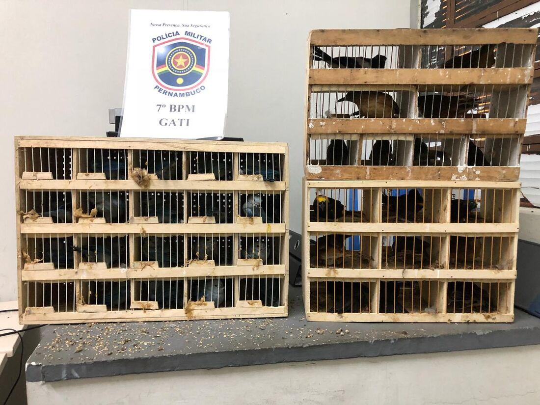 Aves eram transportadas em gaiola dentro de ônibus interestadual