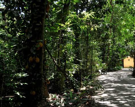 Trilha do Jardim Botânico