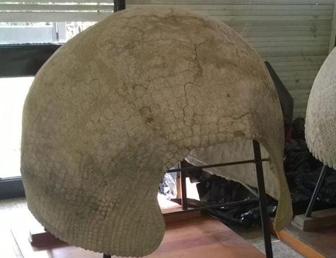 Carapaça do gliptodonte, uma espécie tatu pré-histórico