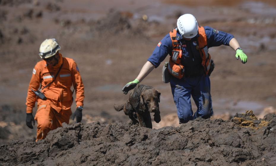 Resgate de cachorro pelo Corpo de Bombeiros em Brumadinho