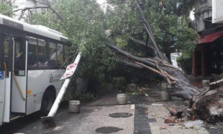 Fortes chuvas no Rio de Janeiro derrubaram árvores