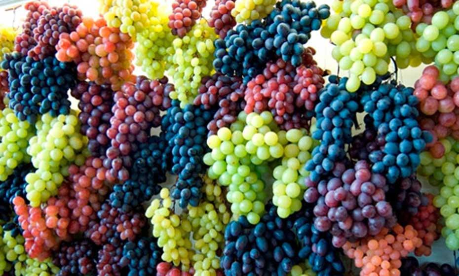 As uvas viníferas e sua etimologia