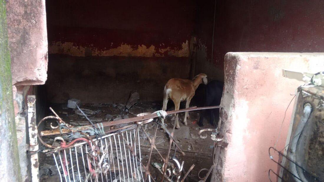 Animais eram abatidos de maneira imprópria