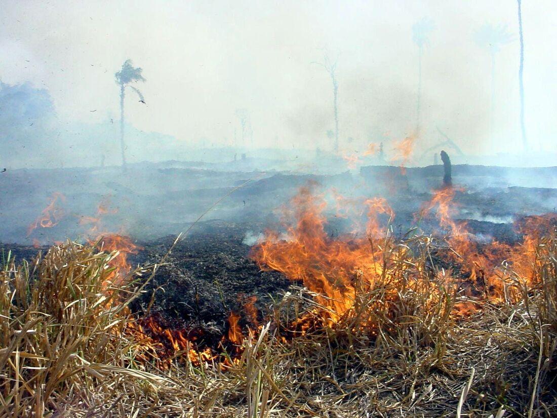 Imagens mostram queimadas em Rondônia