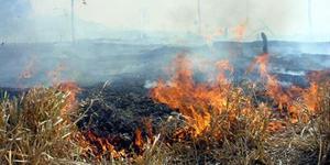 [300] queimada, incêndio