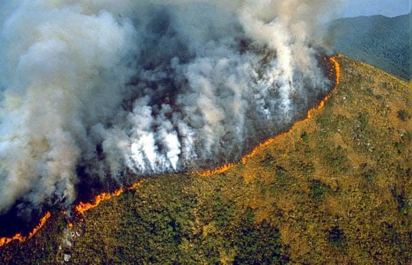 Foto foi publicada no jornal Guardian em 2007, em uma matéria especial sobre o desmatamento desta floresta