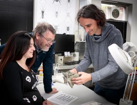 """Pesquisadores neozelandeses analisam fóssil de """"pinguim gigante"""""""