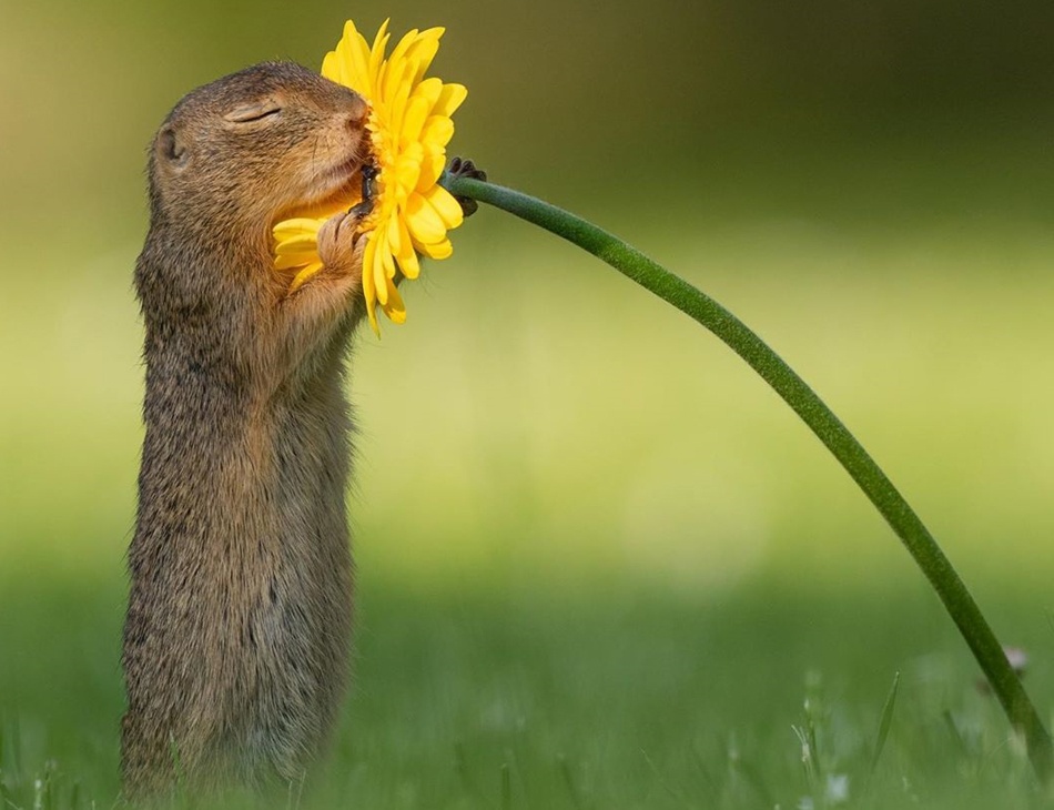 Esquilo parece estar apaixonado pela flor