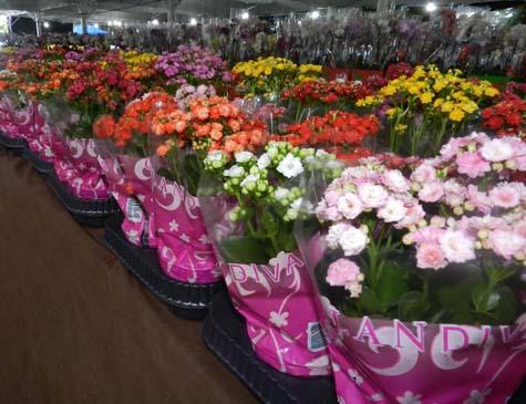 O evento desse deste ano ampliou a área de realização de três mil metros quadrados para quatro, e aumentou o número de flores de 20 mil para 25.