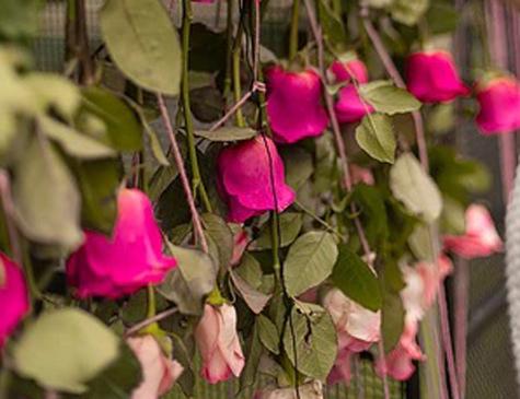 Intervenção urbana de flores