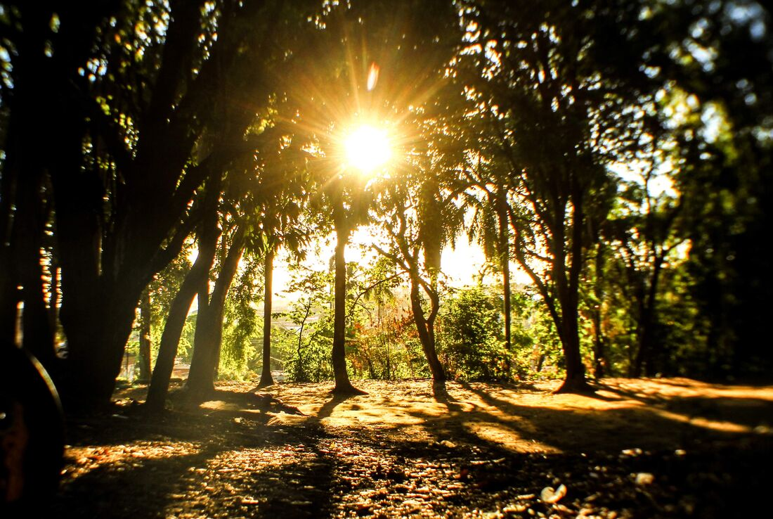 Luz solar estimula a serotonina