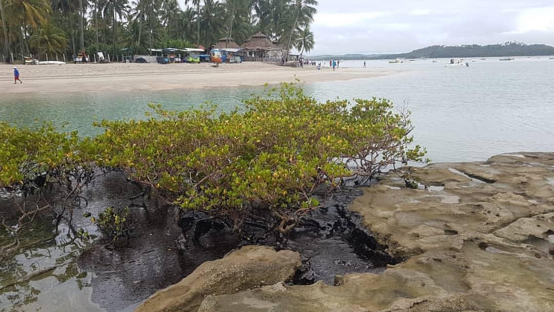 Manchas de óleo na Praia de Maracaípe