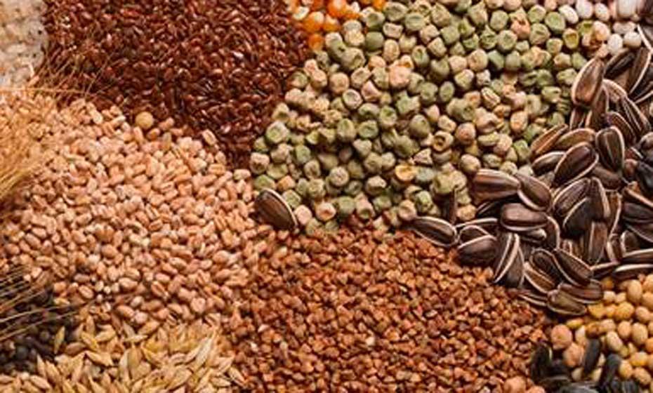 Grãos são fontes naturais de nutrientes e fibras