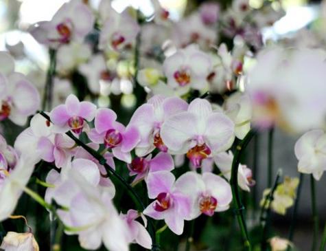 13° Festival das Flores