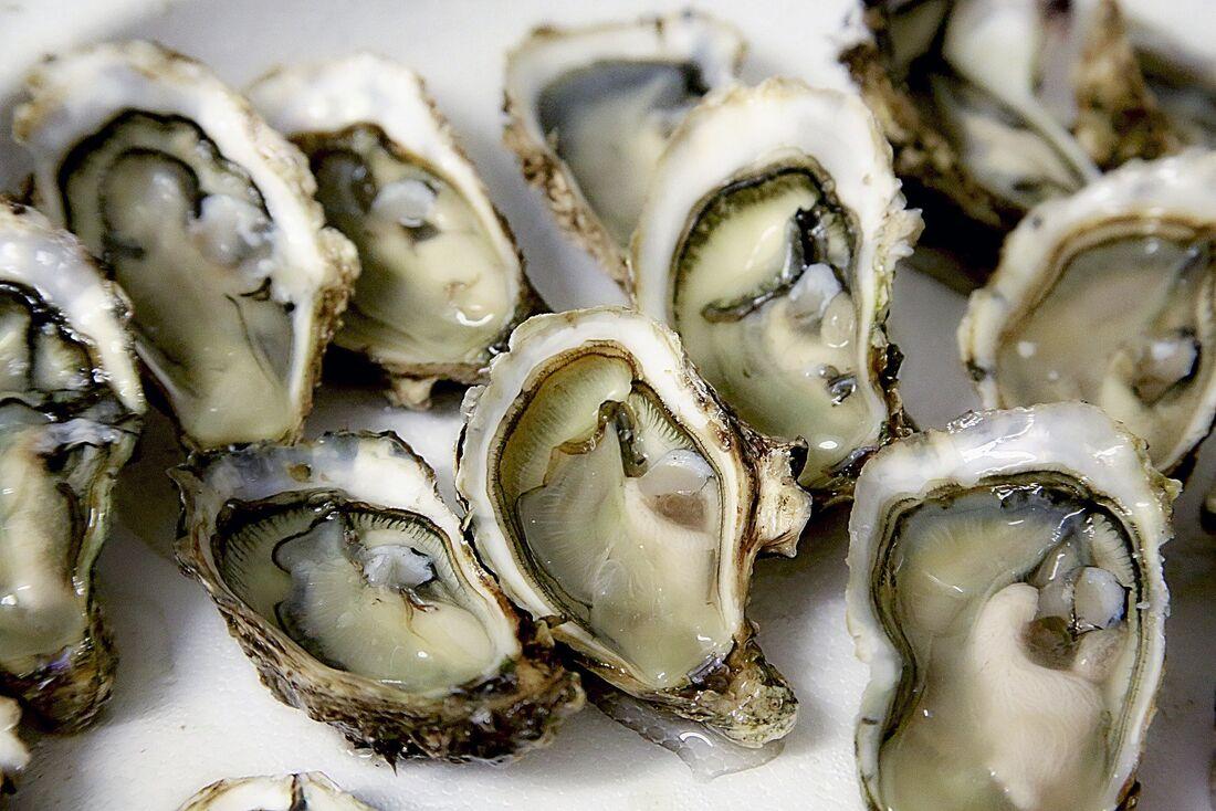 Consumo de ostras