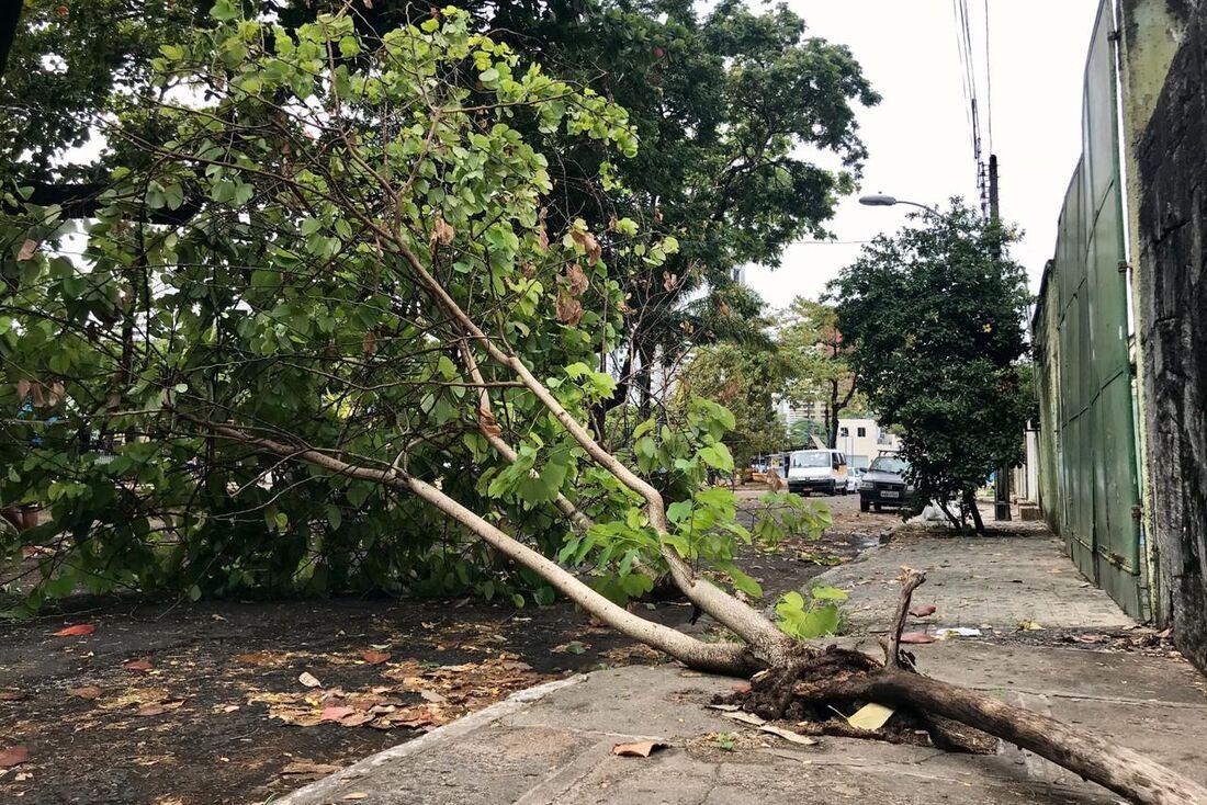 Árvore caída na Av Eng. Agamenom Magalhaes Melo, Tamarineira