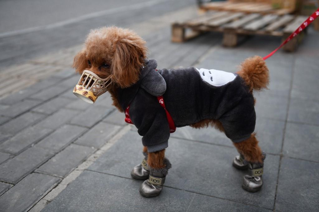Imagens de arquivo mostram cão com máscara para proteger contra coronavírus