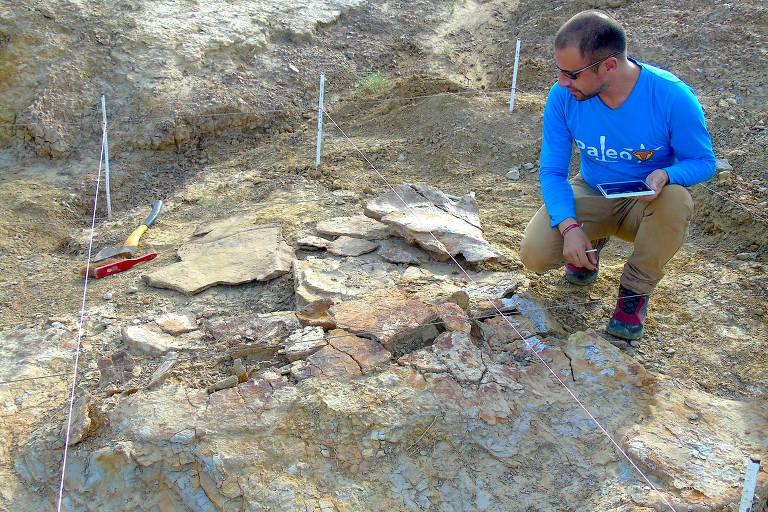 Fóssil da tartaruga gigante