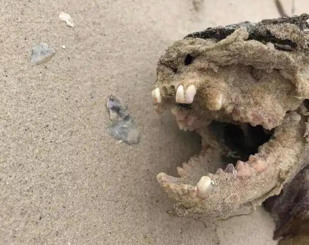 Corpo estranho encontrado em parque nos EUA