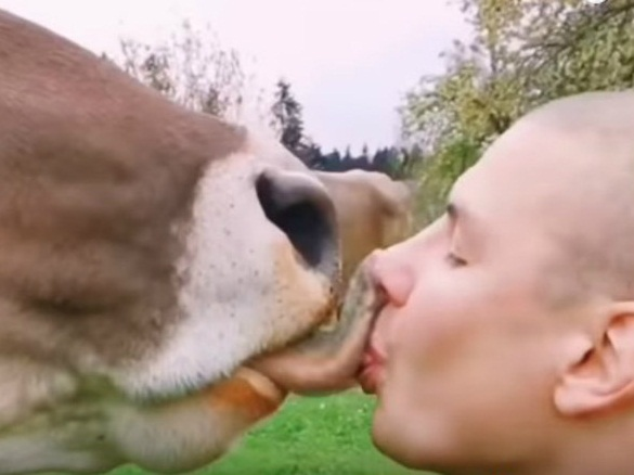 Beijo no animal é considerado bizarro pelos internautas