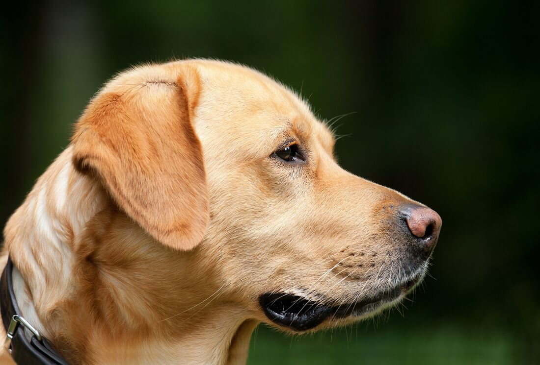 Cuidados são necessários para cuidar dos animais durante a quarentena