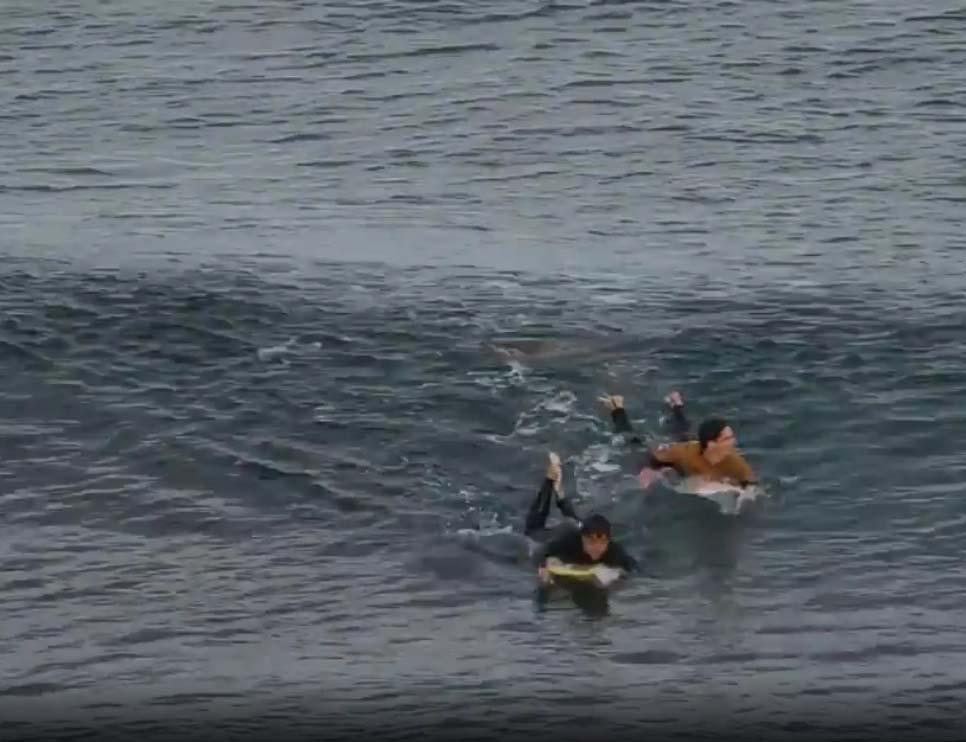 Surfista francês escapa de ataque de tubarão na Austrália
