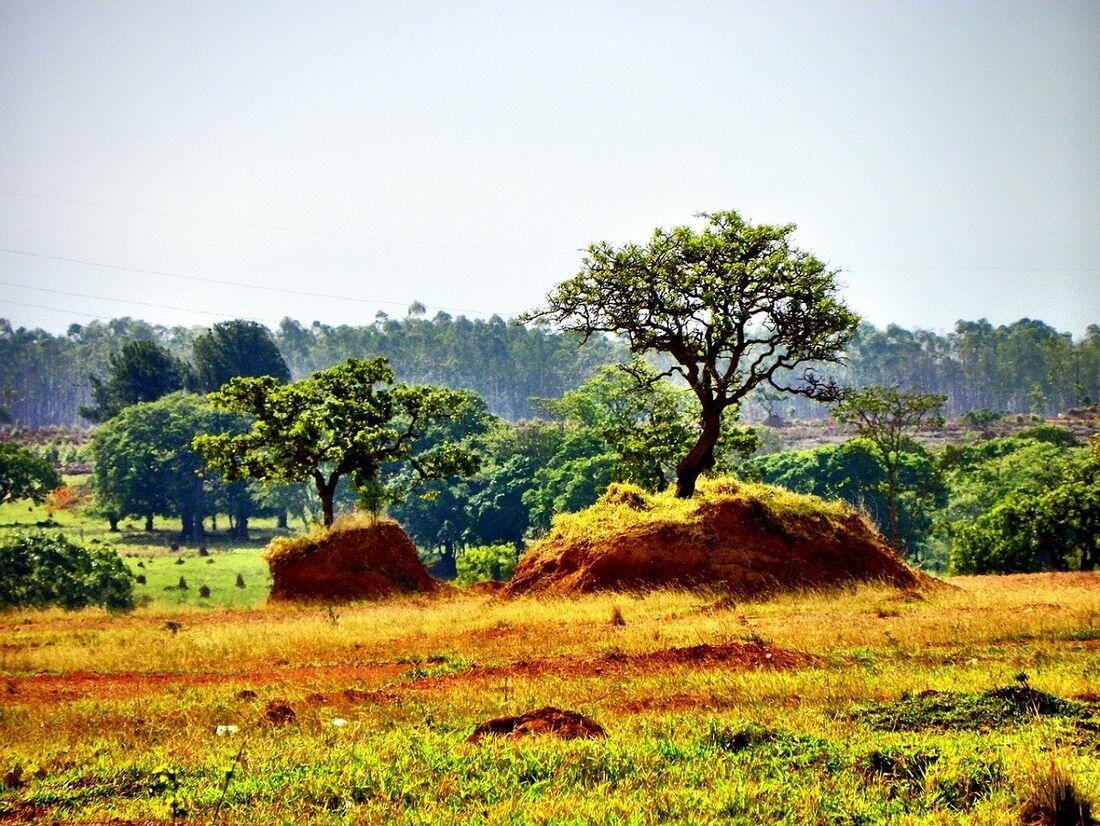 Desmatamento no cerrado, em Goiás