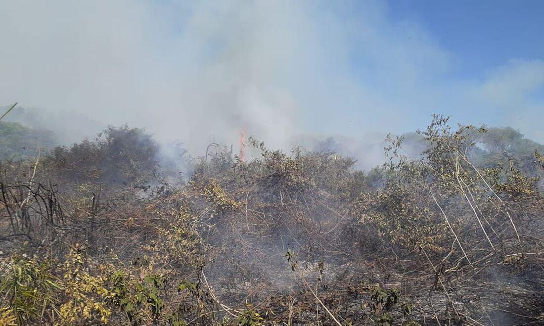 Incêndio destrói área do Pantanal perto de Corumba