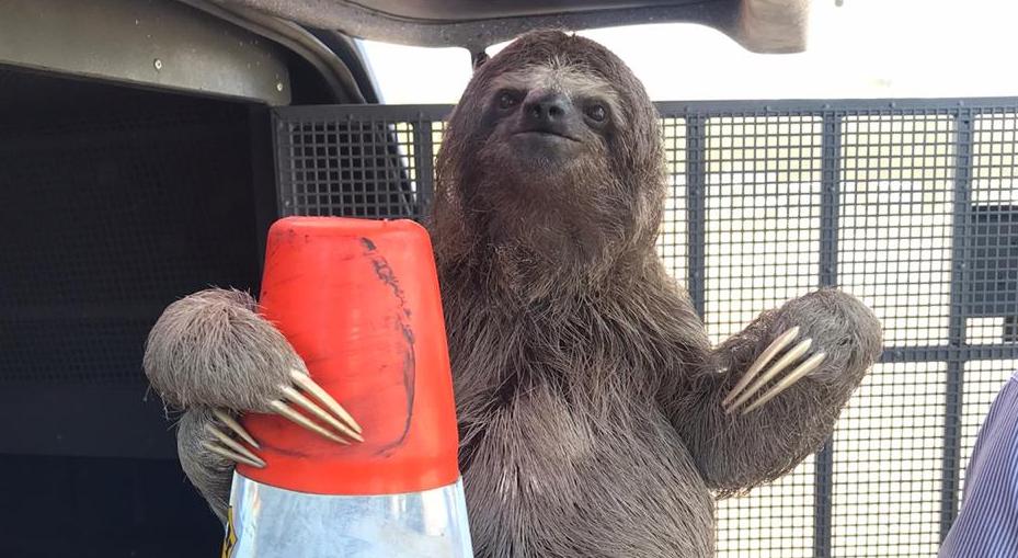Animal foi encaminhado em segurança a uma reserva ambiental