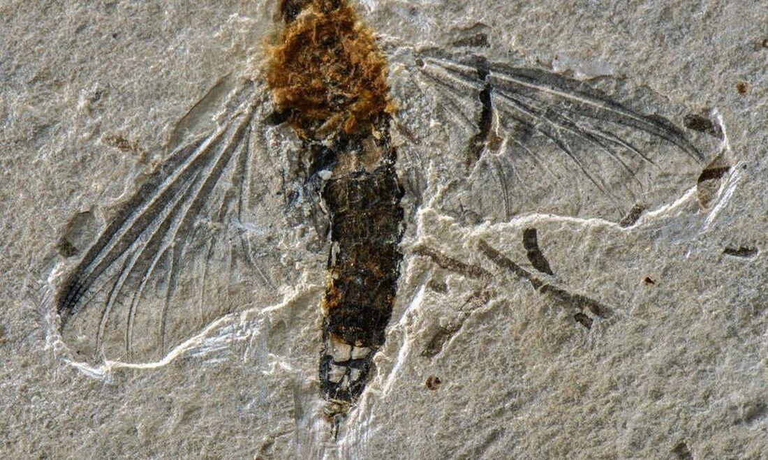 Fóssil encontrado na Bacia do Araripe, no sul do estado do Ceará