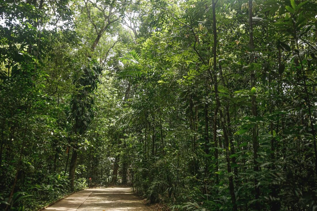 Jardim abarca 10,7 hectares de Mata Atlântica